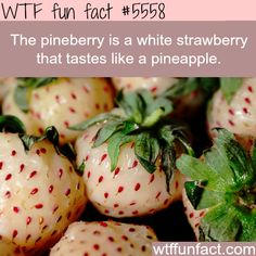 Pineberry - WTF fun facts