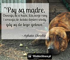 Dog Quotes, Poetry Quotes, Motto, Wisdom, Lettering, Thoughts, Motivation, Funny, Animals