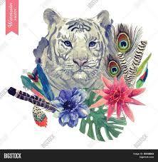 Tiger flower vector에 대한 이미지 검색결과
