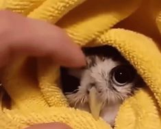 Cute little funny minnie gif We also have a Telegram channel with the same GIFs: t.me/catgifcentral Cute Little Animals, Cute Funny Animals, Funny Cute, Funny Owls, Cute Birds, Cute Owl, Mundo Animal, My Animal, Animals And Pets