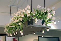 flowers in a box | Beautiful Decoration From Flower Box Ideas: Flower Box Ideas