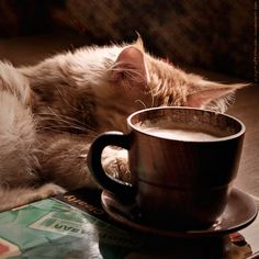 "coffee & cats - my 2 favorite ""Cs""! I Love Coffee, Coffee Break, My Coffee, Coffee Drinks, Coffee Cups, Death Before Decaf, Coffee World, Cozy Cafe, Coffee Quotes"