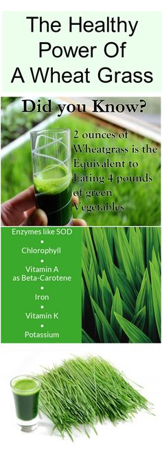 If it is planted on an organic, clean soil, wheat grass absorbs even 92 of the 115 known minerals from the soil. It is a real treasure trove of minerals, vitamins, enzymes, amino acids and, of course, chlorophyll, which actually makes up about 70% of the composition of wheat grass #wheat #grass #healthy #living #use #drink