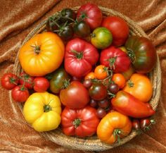 http://worldgardening.blogspot.com/2012/12/tomatoes-need-calcium-to-achieve-their.html