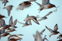 flocks of birds high res - Google Search
