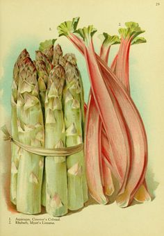 1. Asparagus; 2. Rhubarb.