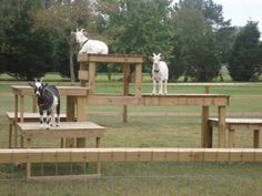 cool goat play ground