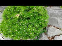 Modern kert ÖTLETEK, kertépítés, kerttervezés - YouTube Herbs, Youtube, Herb, Youtubers, Youtube Movies, Medicinal Plants