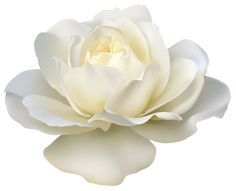 flower no background에 대한 이미지 검색결과