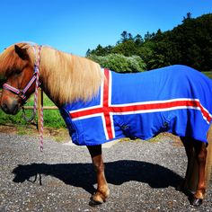 #turridning  #heste  #ridning #islandskeheste #icelandichorse #icelandicpherd #rideture #tøltheste #vengedalen