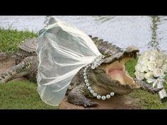 Mann heiratet Krokodil ➤ Die Ehe für alle aus Sicht der Bibel