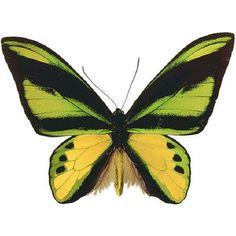 insect et papillon