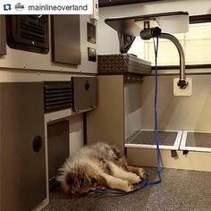 https://flic.kr/p/FqHMfH   #Repost @mainlineoverland  Best doghouse ever: this 10-week-old Sheltie pup decided to take a nap in his new home-away-from-home, a Silver Spur #fourwheelcampers Hawk. #fwchawk #mainlineoverland #truckcamper #camperdog #sheltie
