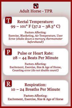 Equine Vital Signs