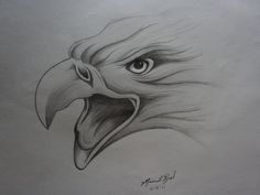 Eagle Sketches | Screaming Eagle Drawing by Nina Rynd - Screaming Eagle Fine Art Prints ...