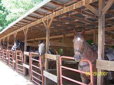 pisgah stables mountain top or waterfall horseback rides