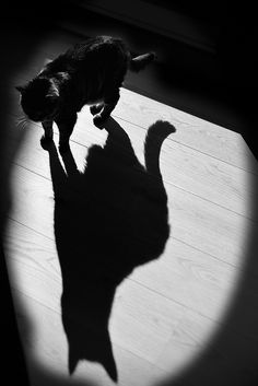 black cat brings luck...   by olroux