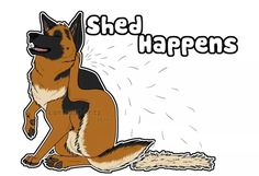 "German Shepherd ""Shed Happens"".. For real! Its happening right now!! Have to sweep atleast twice a day and i vaccum every day to try and keep it at bay lol"