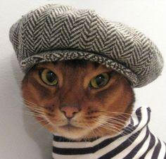 Designer creates cool cat clothing range for fashion forward felines  http://www.etsy.com/shop/CatAtelier