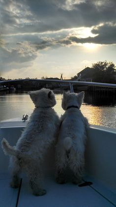 """Click visit site and Check out Best """"Westie"""" Shirts. This website is superb. Tip: You can search """"your name"""" or """"your favorite shirts"""" at search bar on the top."""