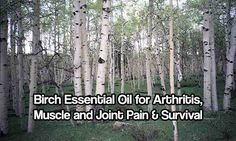 Essential oils are used the world over to help ease and comfort various maladies. Birch essential oil is fantastic for helping ease joint and muscle pain!