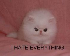 i agree with you small puffball, i agree