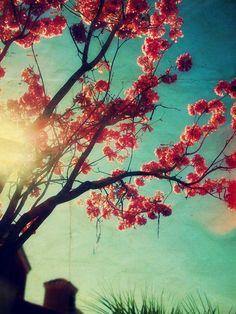 Springtime Sing by: dan0swenson