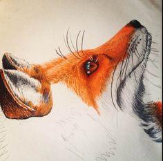 Bildergebnis für fox pencil