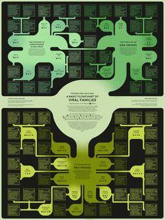 A flowchart of dangerous viruses