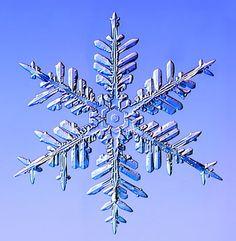 Gallery Snowflakes: A Fernlike Stellar Dendrite snowflake