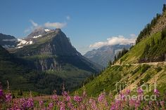 Here is a view of Going to the Sun Road from a mountain meadow filled with wildflowers in Glacier National Park in Montana.