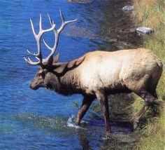 From Idaho Hunting & Fishing web site