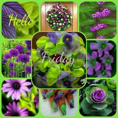 Hello Friday - Created with BeFunky Photo Editor Friday Morning, Good Morning, Happy Friday Quotes, Butterfly Quotes, Days Of Week, Hello Friday, Morning Greeting, Day For Night, Morning Images