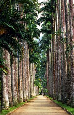 Rio de Janeiro Botanical Garden, Brazil.