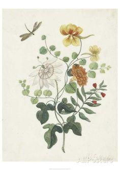 Still Life with Flowers (1662) Prints by Machtelt Moninckx - at AllPosters.com.au