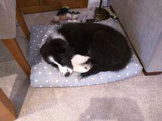 Logan on a Grey Dotty Cushion Bed #dog #happydog  #happydog #happycustomer