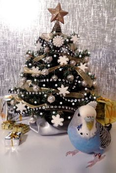 """""""Have yourself a merry little Christmas - Love, Cooper and the flock. Funny Birds, Cute Birds, Pretty Birds, Beautiful Birds, Merry Little Christmas, Christmas Cats, Christmas Bulbs, Budgie Parakeet, Budgies"""