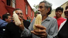 Defiende Toledo maíz auténtico | Noticiasnet