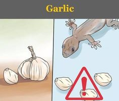Say Goodbye To Those Fat, Ugly Lizards At Home With These 8 Genius Tricks