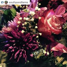 South Pond Farms is on TV! Catch them Sundays at 830pm on the @BeMakeful channel  #artsKN #ExperienceKN #foodKN    #Repost @southpondfarms with @repostapp    Cheerful Monday Blooms on a rainy day at the farm. #BeHappy #MondayMotivation #Flowers #Cheerful #LocallySourced #Blooms #PinkFlowers #PurpleFlowers #Wedding #Bouquet #centerpiece #kawarthas #kawarthasnorthumberland #kawarthalakes #bethany #southpondfarms #bemakeful #makeful #ontariowedding
