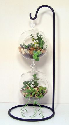 Hanging Glass Succulent Terrariums on Large Wrought Iron Stand