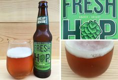 Our review of Great Divide Fresh Hop Pale Ale fall seasonal release. Fresh/wet hop harvest Pale Ale by Great Divide Brewing Co.