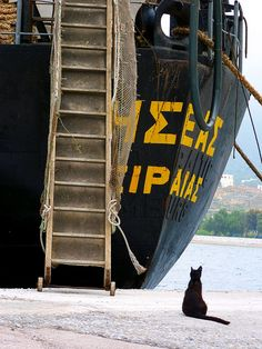 Cat, boat and ladder - Greece