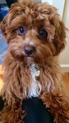 Get Helpful Tips About Dogs That Are Simple To Understand – Info About The Dog Cute Dogs And Puppies, I Love Dogs, Pet Dogs, Dog Cat, Doggies, Beautiful Dogs, Animals Beautiful, Cute Baby Animals, Animals And Pets