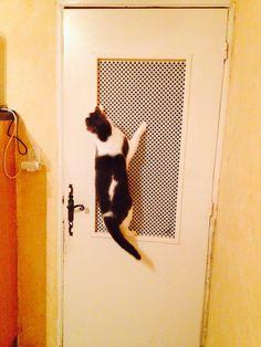 Drôle de chat non?