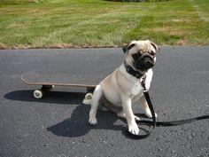 Spanky says skateboarding's not a crime.