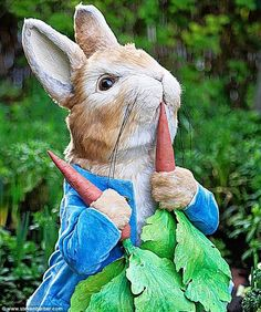 Beatrix Potter's Peter Rabbit to be honoured at Chelsea Flower Show Rabbit Garden, Rabbit Art, Beatrix Potter Illustrations, Rabbit Names, Beatrice Potter, Peter Rabbit Birthday, Peter Rabbit And Friends, Rabbit Illustration, Fairy Figurines