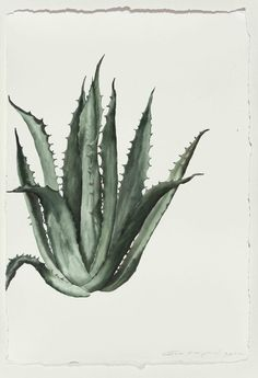 The Copier No. Guo Hongwei I love botanical paintings and prints. Botanical Drawings, Botanical Prints, Inspiration Artistique, Cacti And Succulents, Painting & Drawing, Cactus Painting, Plant Drawing, Painting Inspiration, Watercolor Art