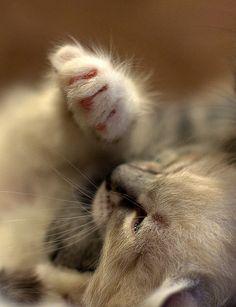 Kitten paw .)