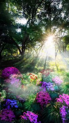 Beautiful Photos Of Nature, Nature Photos, Amazing Nature, Beautiful Images, Beautiful Flowers, Beautiful Landscape Wallpaper, Beautiful Landscapes, Nature Gif, Image Hd